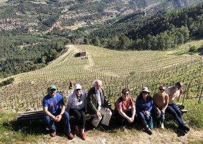 Vineyard at Clos Figueras