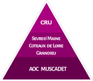 Birth of Muscadet Cru Image